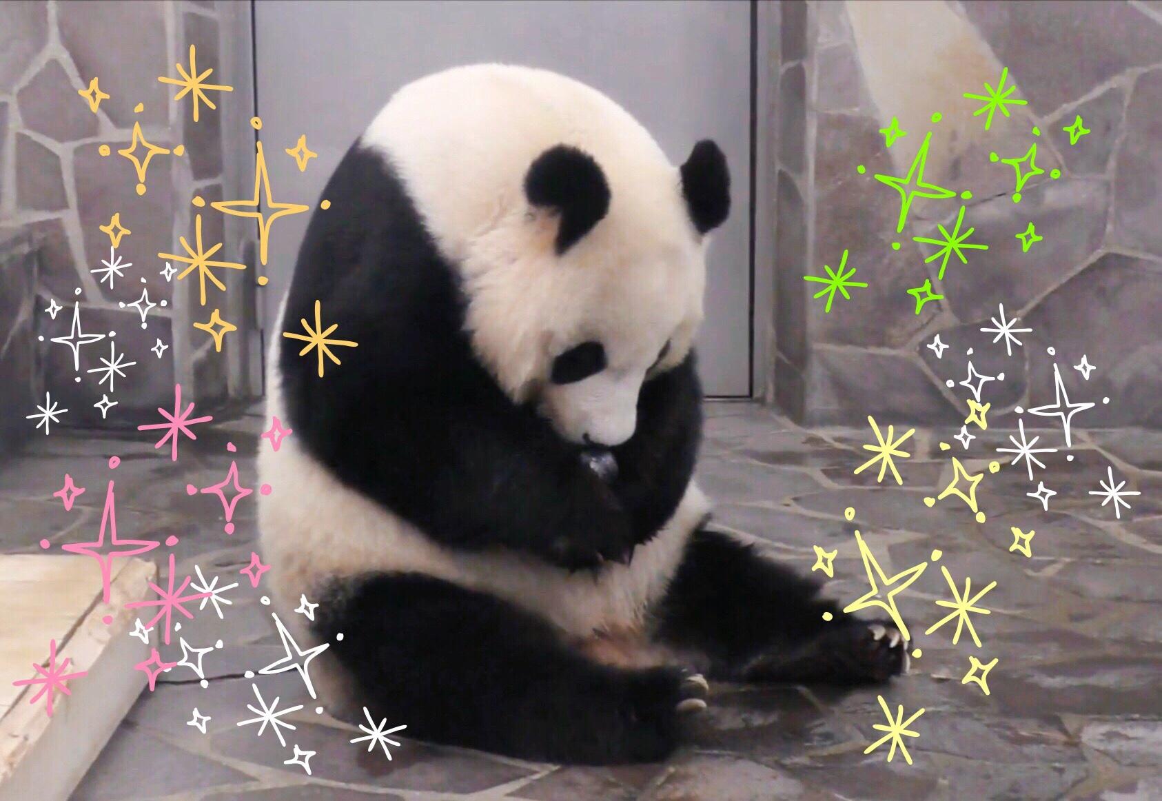 王子 動物園 ツイッター