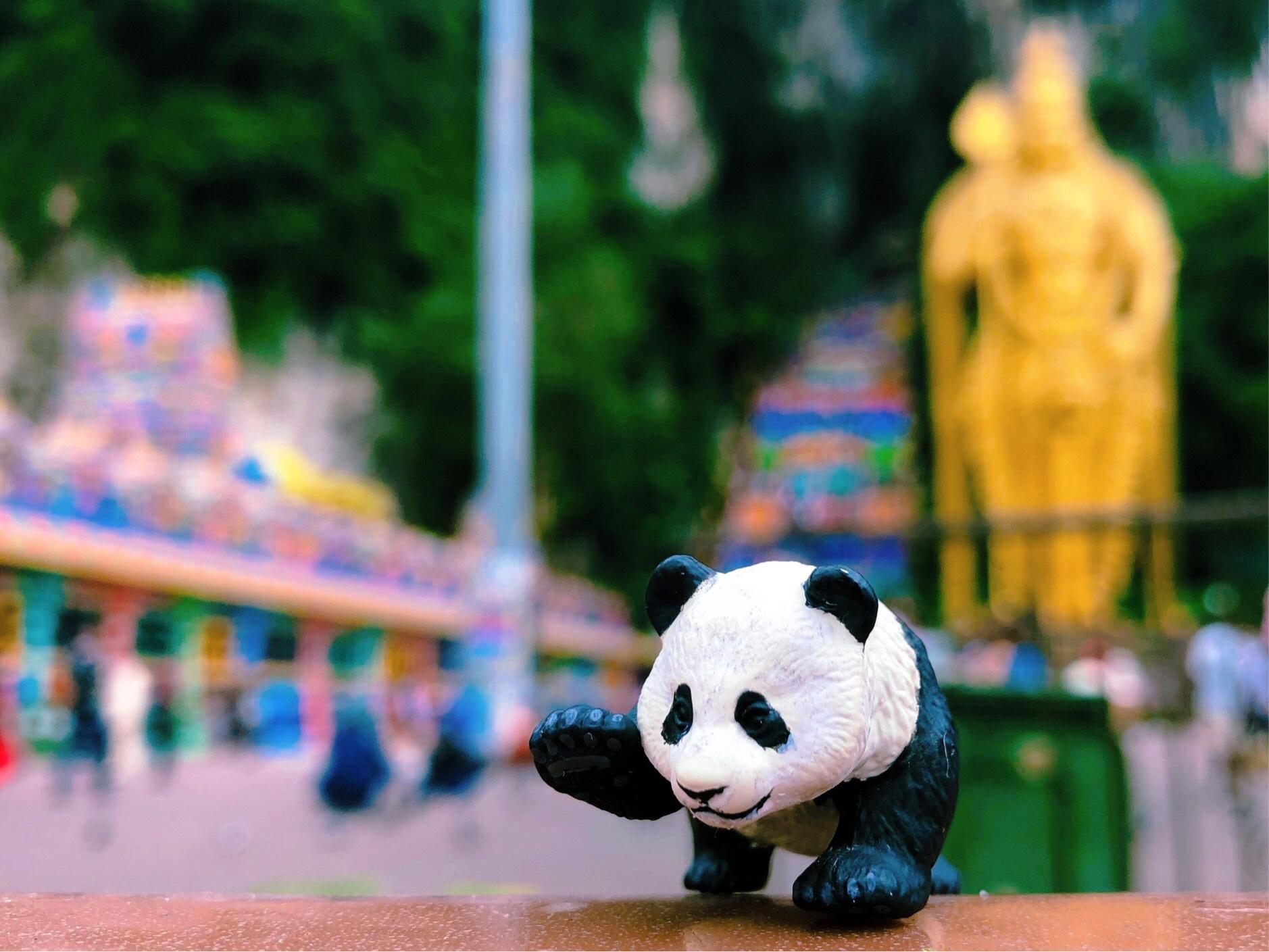 まっしろ子パンダに会いにズーネガラ&カラフルなバトゥ洞窟!!2018年パンダの旅!シンガポール&マレーシア 7日目。